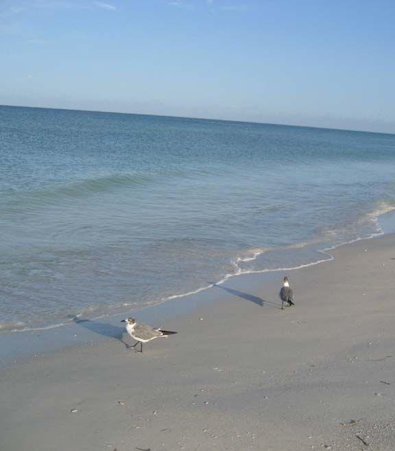 Anna Maria Island Beach: Tasty Travel: Florida: Anna Maria Island Provides A Unique